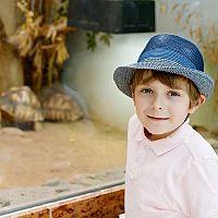 Hogyan rendezzük be a terráriumot szárazföldi teknősnek?