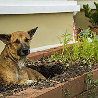 Hogyan szoktassuk le kutyánkat a kaparásról és a jelölésről a kertben?