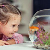 Az első saját akvárium - hogyan válasszunk? Milyen kiegészítők szükségesek és mit kell megvásárolni?