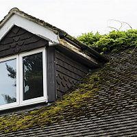 Hogyan távolítsuk el a mohát a tetőről?