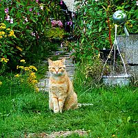 Hogyan űzzük el a macskát a kertből?