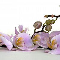 Hogyan gondozzuk az orchideát?