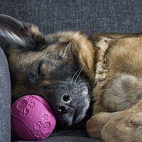 Hogyan szabaduljunk meg az állati szőrtől nem csak a kanapén?