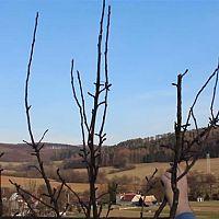 A gyümölcsfák téli metszése