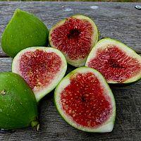 Zrelé plody figy