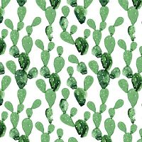 Cactus tapéta, 50 x 280 cm - Dekornik