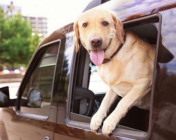 Biztonságos utazás az autóban kutyával: Milyen kiegészítők jönnek jól?
