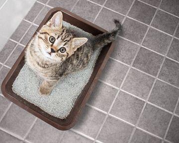 A macskaalom kapható szűrővel és tetővel is. A legjobb a szilikát macskaalom.