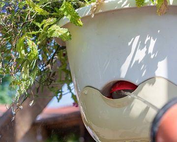 Önöntöző cserép az erkélyen lévő fűszernövényekre. A függő virágcserép a legtrendibb!
