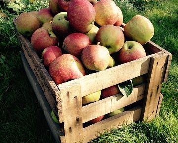 Hogyan tároljuk a zöldségeket és a gyümölcsöket?