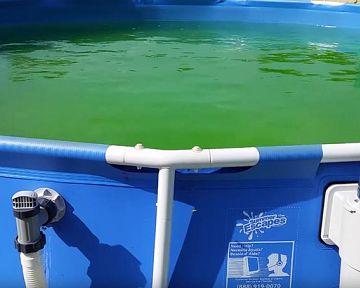 Hogyan szabaduljunk meg a zöld víztől és moszatoktól a medencében?
